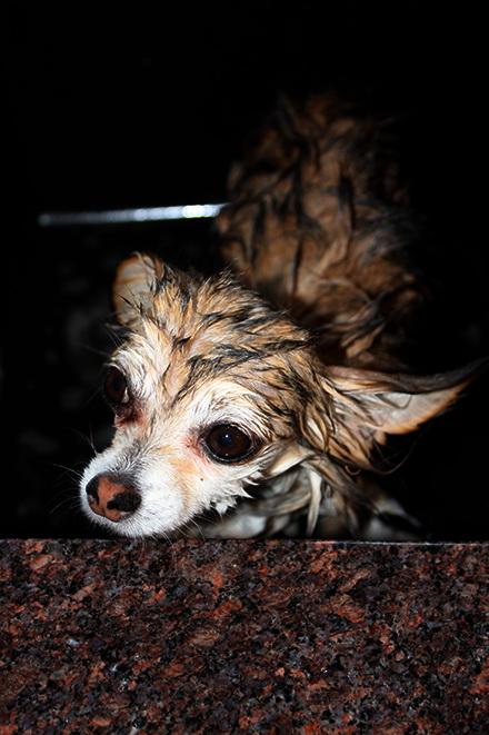Wet_dog