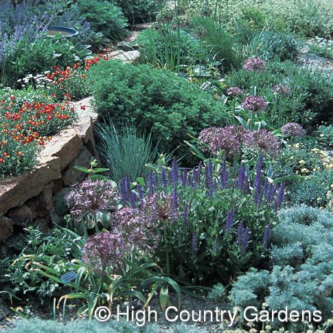 Cold Hardy Mediterranean Garden